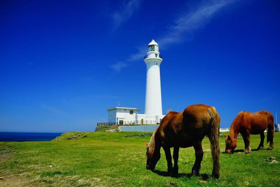 大自然、馬、灯台の三拍子が揃う癒しの地 青森県・尻屋崎