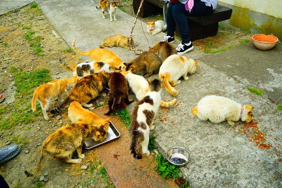 多くの猫たちに囲まれる猫好きの聖地、青島