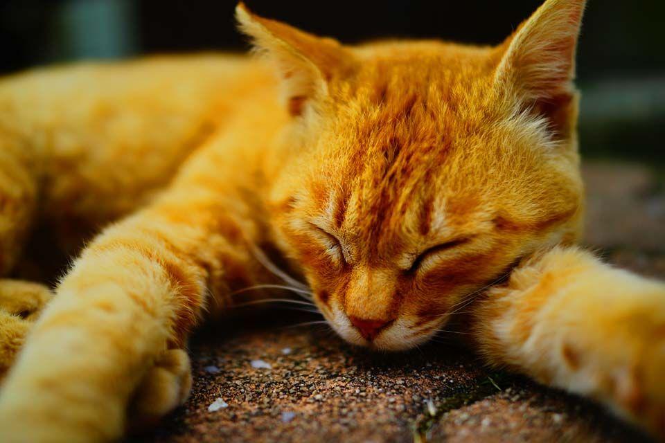 世界から猫好きたちが集まる猫好きの聖地、愛媛県「青島(猫島)」