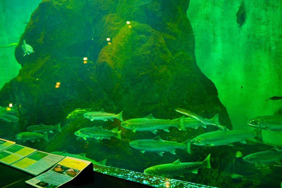 サケ一辺倒ではないマニアックな水族館