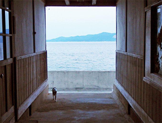 初めて来たのに懐かしい!海を臨む小学校の宿