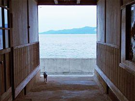 目の前は海!猫の島・香川県佐柳島「ネコノシマホステル」は古校舎の一軒宿