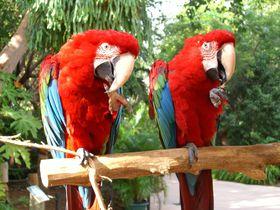 動物好きの人は必見!フロリダにしか生息しない動物達にも会えるジャングルアイランドの魅力とは!?