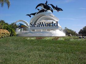 海の動物達に会おう!フロリダ州「シーワールド・オーランド」