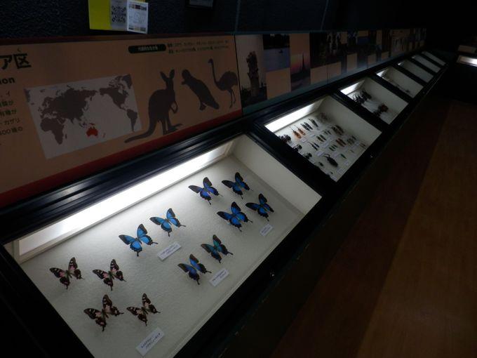チョウをはじめとする魅力的な標本類の数々