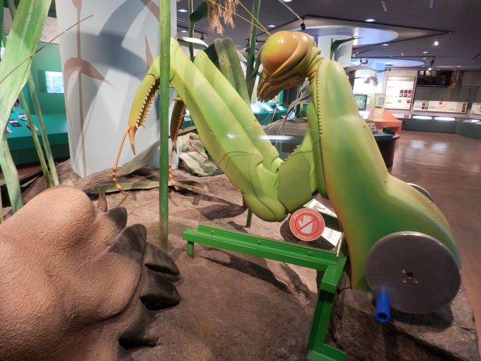 昆虫になった気分で!体験型大型昆虫模型