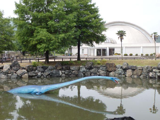 池のなかにも!海に生きる恐竜エラスモサウルス