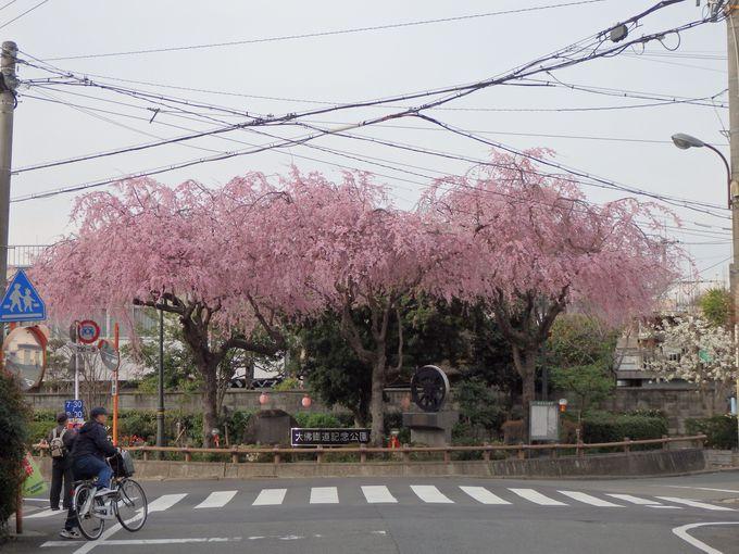 佐保川にちなんだもう一つの歴史!大仏鉄道記念公園のしだれ桜