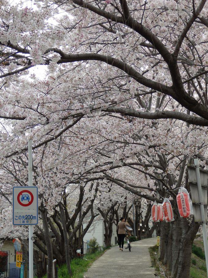 人が行き交う桜のトンネル