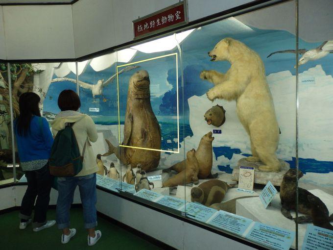 海の珍獣たちも!極地に暮らす生きものたち