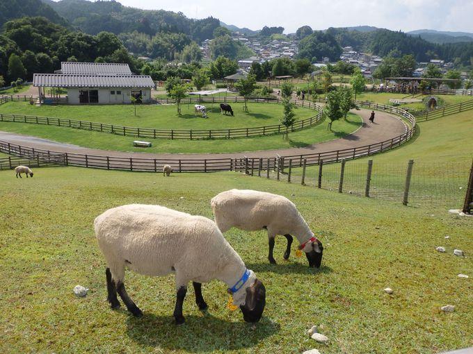 入園無料!動物の放牧風景が見られる「うだ・アニマルパーク」