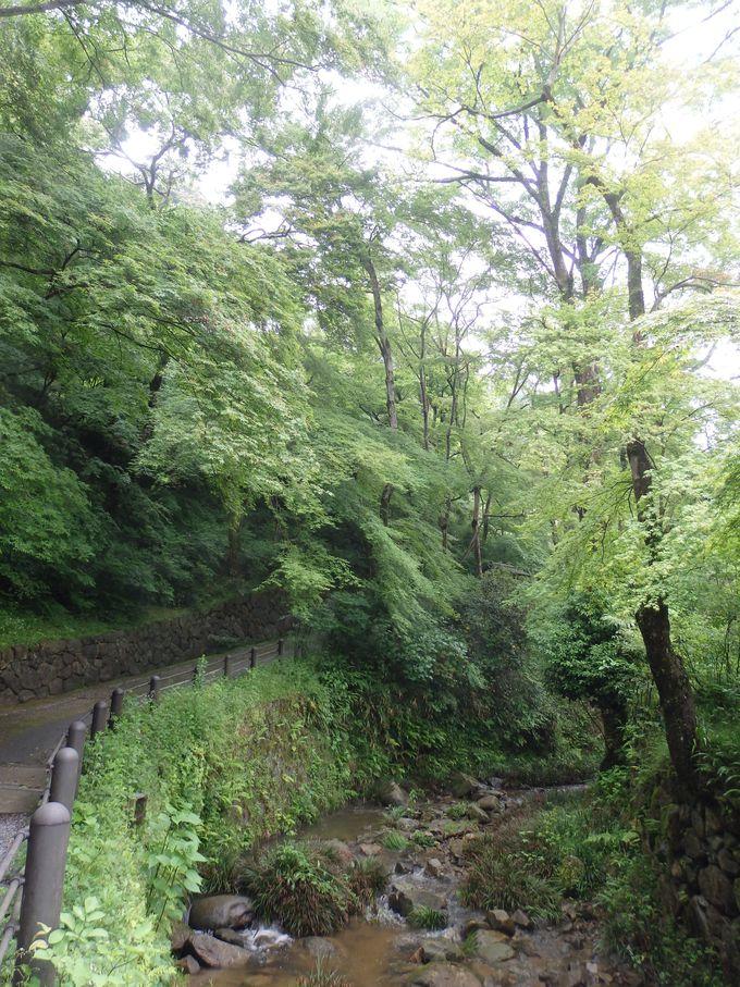 川のせせらぎを聞きながら、新緑を満喫!参道沿いの様子