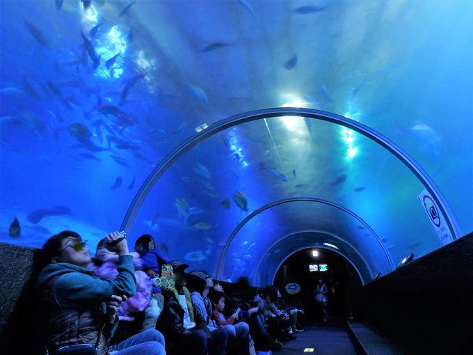 魚の群れを真下から眺めよう!全長24メートルにおよぶ水中トンネル