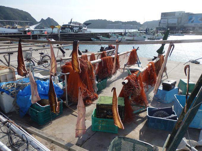 新鮮で珍しい海産物から足湯、温泉旅館まで!紀伊勝浦ぶらり散策