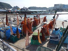 新鮮で珍しい海産物から足湯、温泉旅館まで!紀伊勝浦ぶらり散策|和歌山県|トラベルjp<たびねす>
