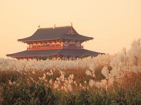 格好の被写体!奈良の世界遺産・平城宮跡はススキの隠れ名所|奈良県|トラベルjp<たびねす>