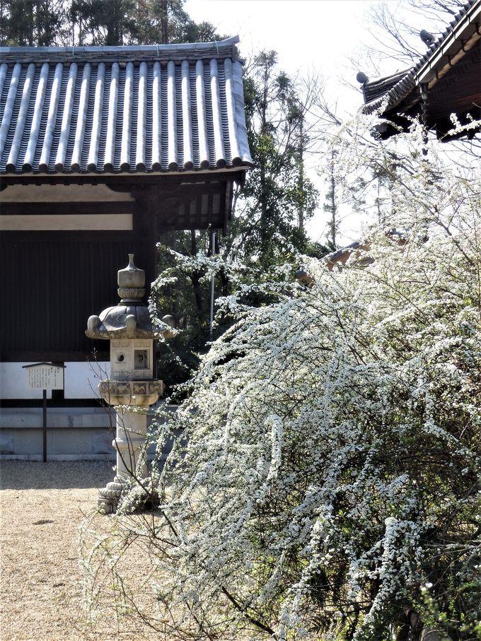 花の寺としても名高い!雪柳の咲き乱れる境内