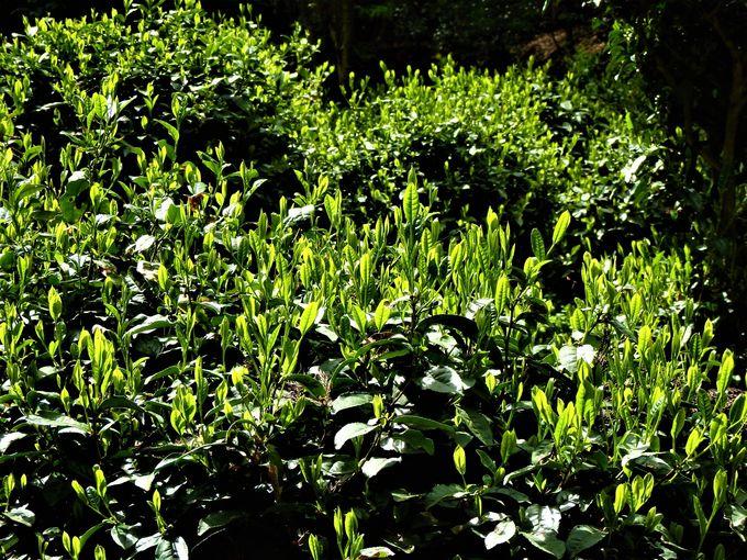 境内で見られる新緑の数々