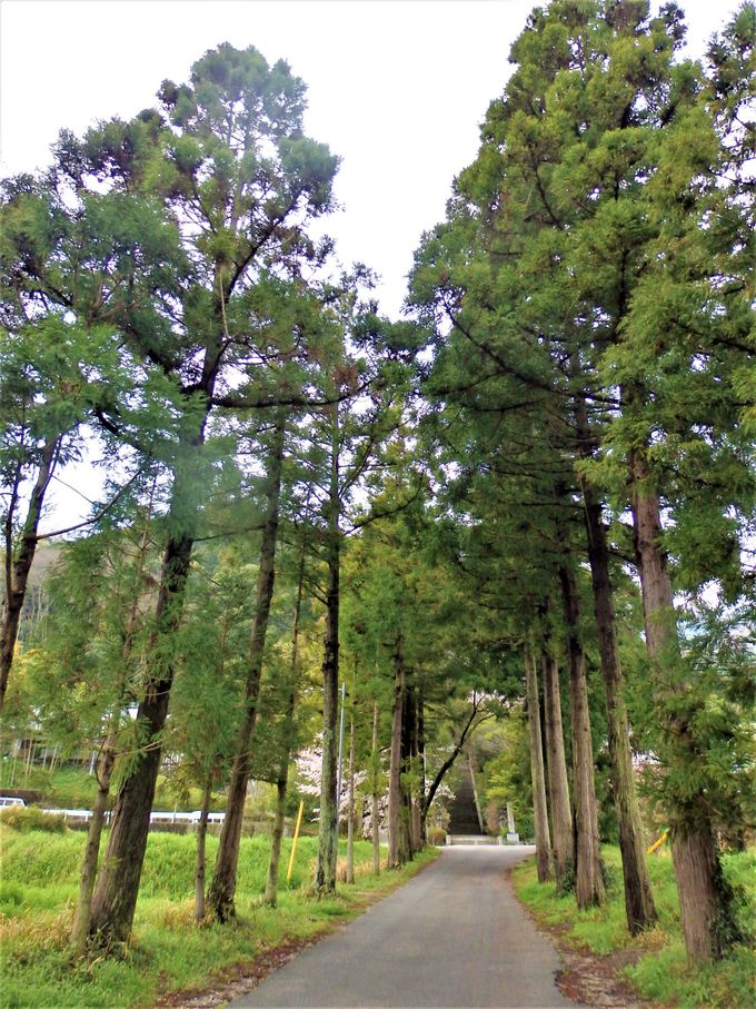 高木にはさまれた特徴的な並木道