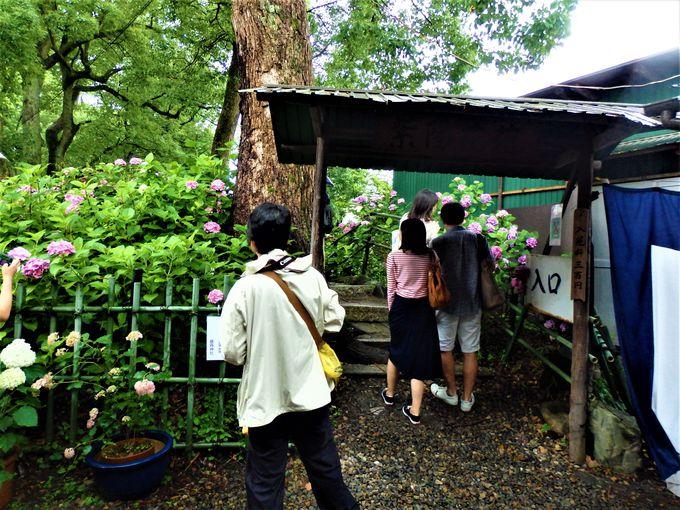 3500株!京都市内有数の紫陽花の名所
