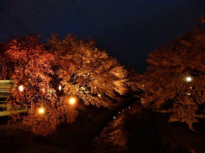 ライトアップの時間帯もお勧め!佐保川の桜並木