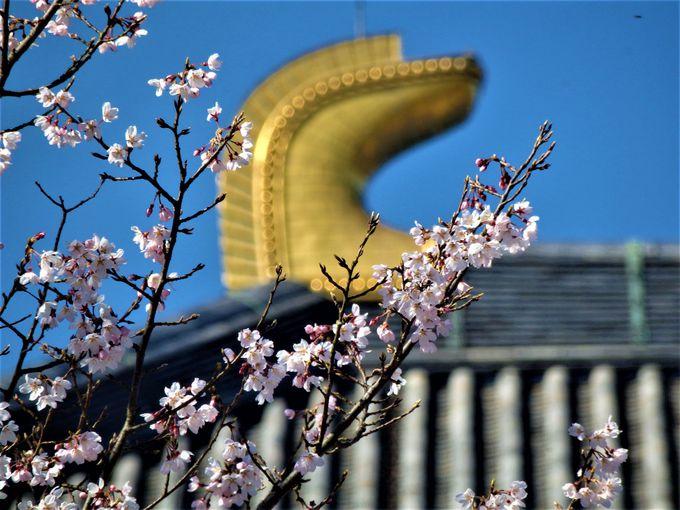 奈良観光の代名詞・東大寺周辺の桜