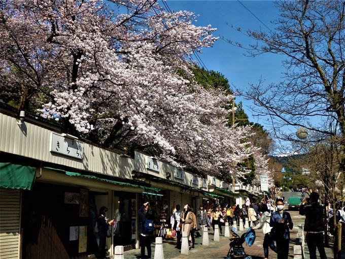 三条通りと日本聖公会奈良基督教会の桜