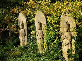 花々が彩る奈良坂の古刹!春の「般若寺」歴史探訪