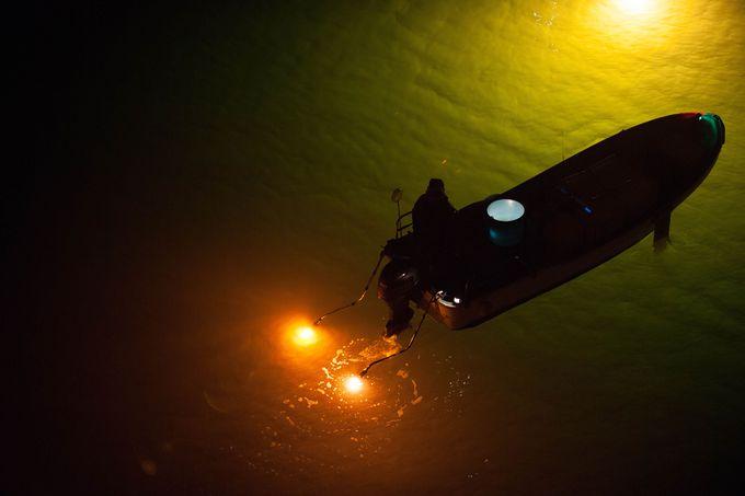 幻想的なシラスウナギ漁を鑑賞するのは吉野川大橋の中央付近から!