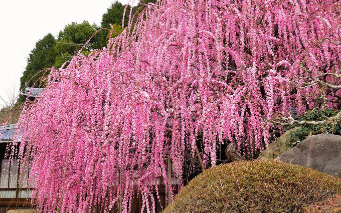 「あわじ花へんろ56番札所」は個人邸の庭!