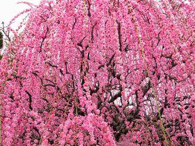 花の楽園、兵庫淡路島の「あわじ花へんろ」をめぐろう!|兵庫県|トラベルjp<たびねす>