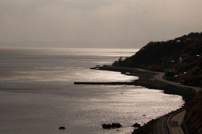 灘黒岩水仙郷の水仙はどこから漂流して来た?