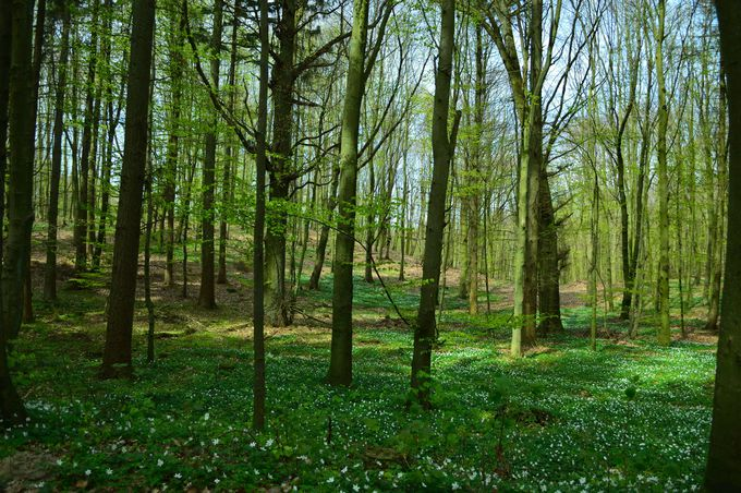 魔法の森にある狩りの城ジャグドシュロッス(Jagdschloss)