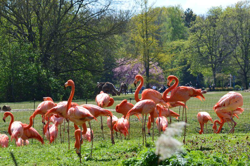 大都市ベルリンでサファリパークの気分が味わえる旧東独からの動物園ティアーパーク