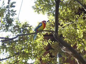 鳥好き必見!南半球の鳥が目の前に!埼玉「キャンベルタウン野鳥の森」|埼玉県|トラベルjp<たびねす>