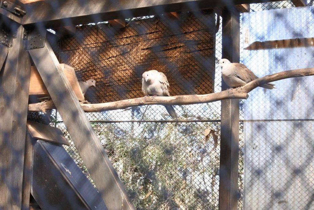 オウムからシラコバトまで、飼育舎の鳥も多種多彩