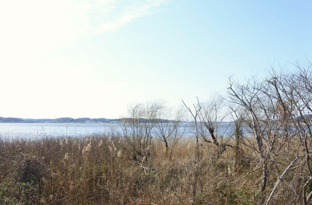 豊かな水辺は絶好のバードウォッチングスポット
