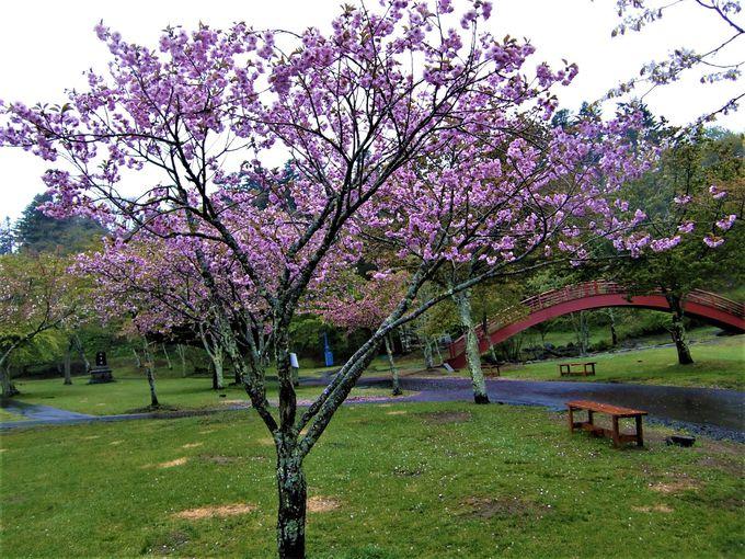 こちらも桜の名所!子野日(ねのひ)公園