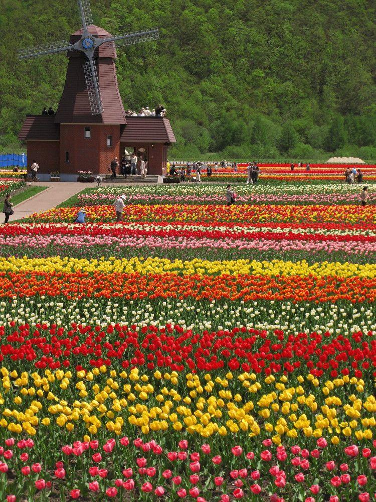 一面に咲き誇る圧巻の花畑は必見!オホーツクの春はこの公園で満喫!