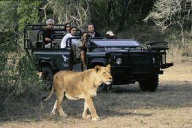 南アフリカ・世界最大級の野生の王国『クルーガー国立公園』でビッグファイブ・サファリを体験しよう!