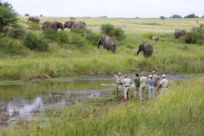 世界最大級の野生の王国「クルーガー国立公園」