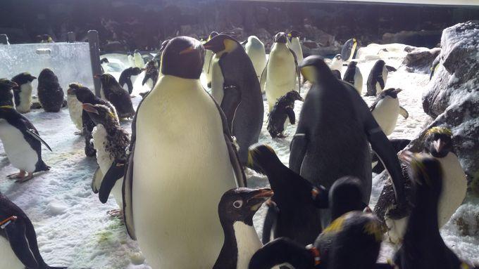絶対体験したいことNO.2はペンギンに触れるプログラム!
