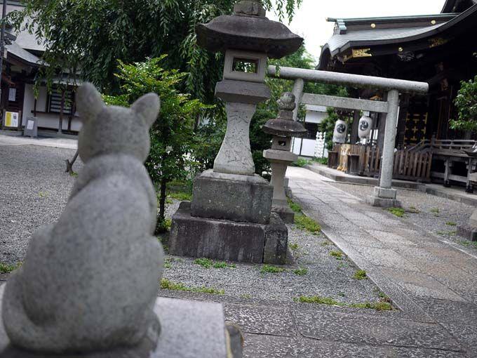 迷い猫が戻ってくる?!不思議な『猫返し神社』(東京・立川)