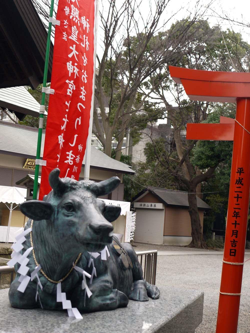 慶応大学 矢上キャンパスの横にいる神牛
