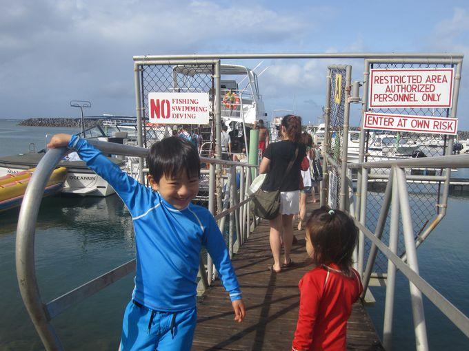 かわいい野生のイルカがグアムの海でお出迎え