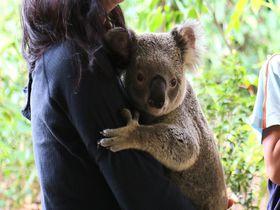 ゴールドコーストでコアラを抱っこ! カランビン・ワイルドライフ・サンクチュアリー