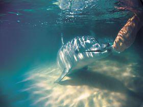 注目度上昇中!オーストラリア・モートン島で野生のイルカに餌付け体験