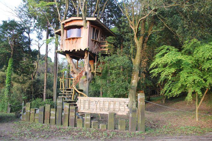 トムソーヤが住んでいそうなツリーハウス!