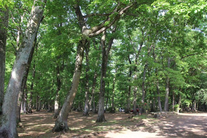 森に癒される!林間サイト(キャンプ場)もおすすめ