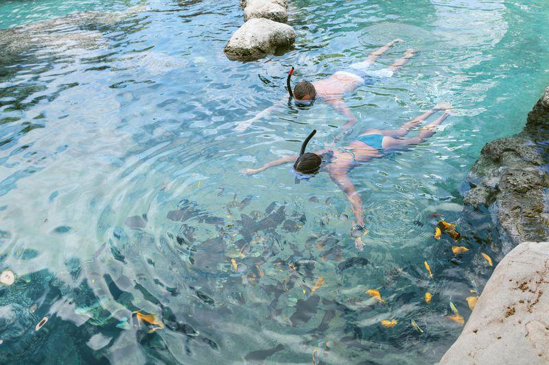 熱帯魚と一緒に泳げるプール!PICグアム「泳げる水族館」